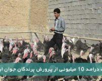 کسب درامد 10 میلیونی از پرورش پرندگان جوان ارومیه