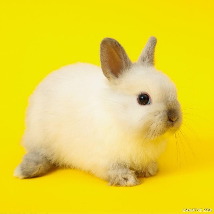 عکس خرگوش های بامزه و خوشگل | عکس خرگوش فانتزی برای پروفایل