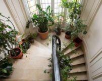 مزایای گل و گیاه مناسب آپارتمان در دکوراسیون داخلی منازل