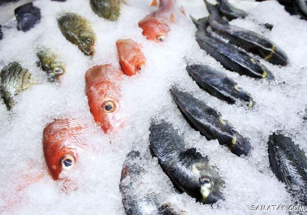 علائم فساد ماهی یخ زده + نشانه های ماهی خراب