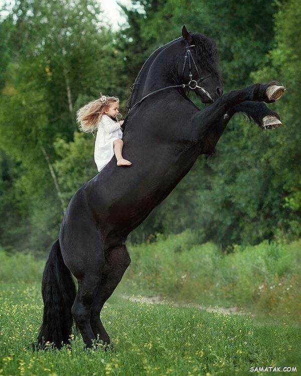 تعبیر خواب اسب | دیدن اسب در خواب نشانه چیست